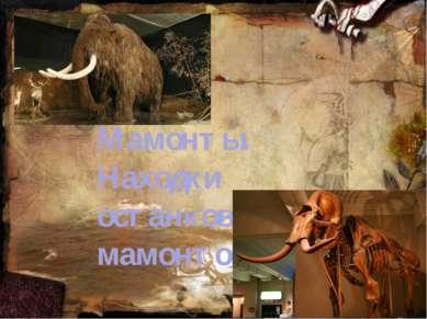 Мамонты. Находки останков мамонтов.