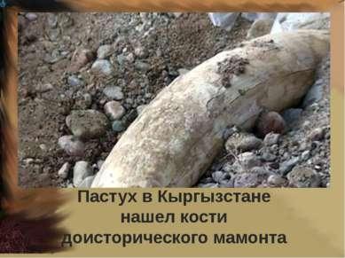 Пастух в Кыргызстане нашел кости доисторического мамонта