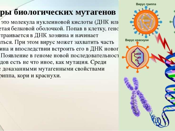 Вирус — это молекула нуклеиновой кислоты (ДНК или РНК), одетая белковой оболо...