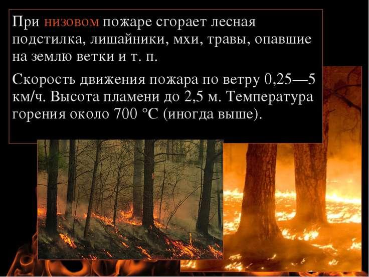 При низовом пожаре сгорает лесная подстилка, лишайники, мхи, травы, опавшие н...