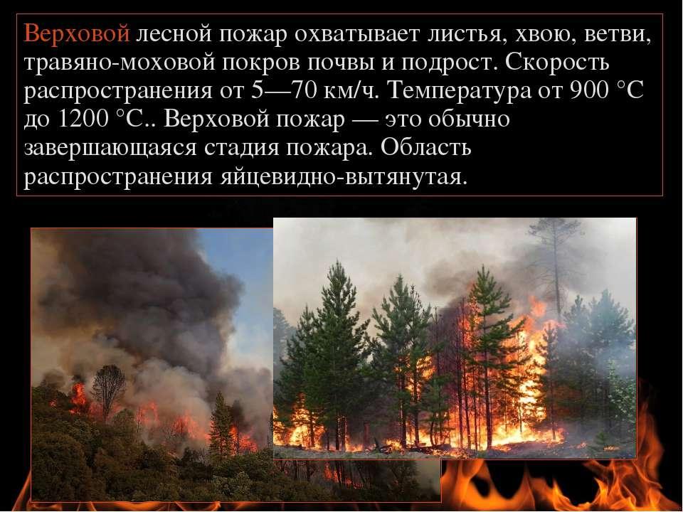 Верховой лесной пожар охватывает листья, хвою, ветви, травяно-моховой покров ...