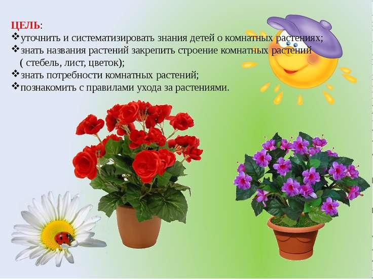 ЦЕЛЬ: уточнить и систематизировать знания детей о комнатных растениях; знать ...