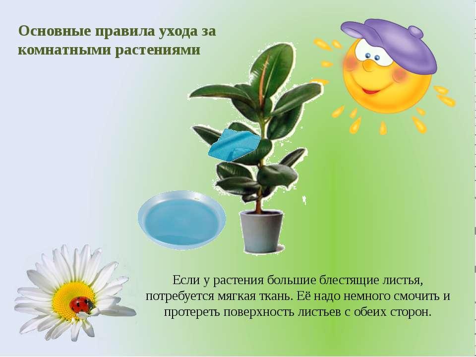 Основные правила ухода за комнатными растениями Если у растения большие блест...