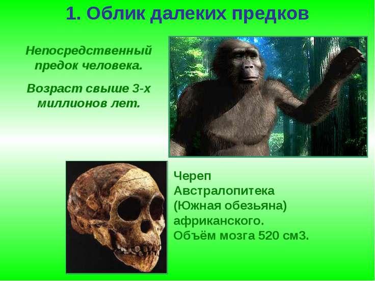 1. Облик далеких предков Непосредственный предок человека. Возраст свыше 3-х ...
