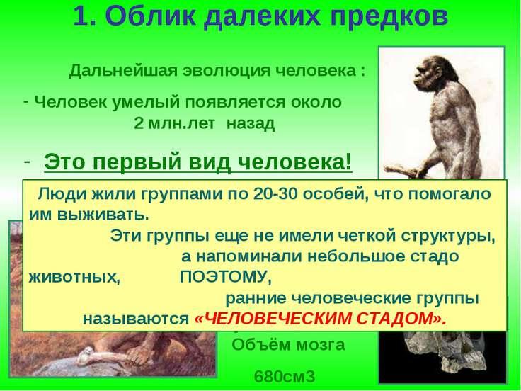 1. Облик далеких предков Дальнейшая эволюция человека : Человек умелый появля...