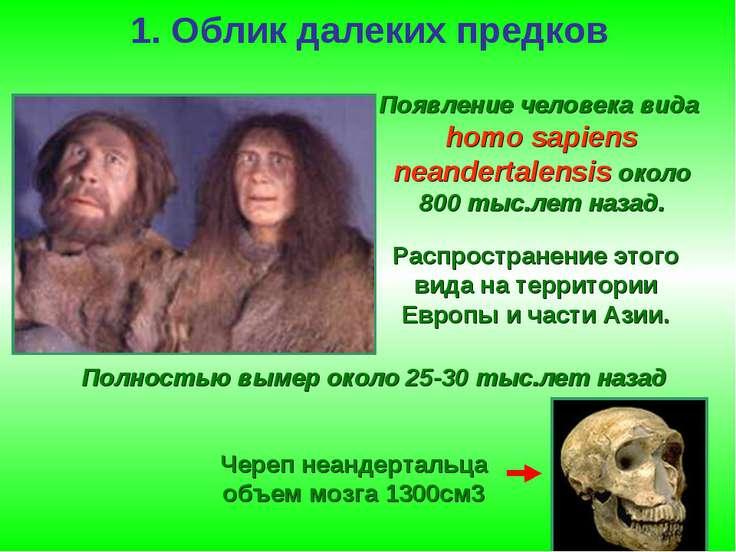 1. Облик далеких предков Появление человека вида homo sapiens neandertalensis...