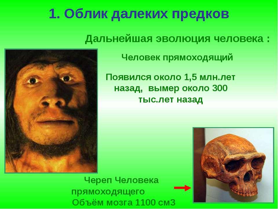 1. Облик далеких предков Череп Человека прямоходящего Объём мозга 1100 см3 Че...