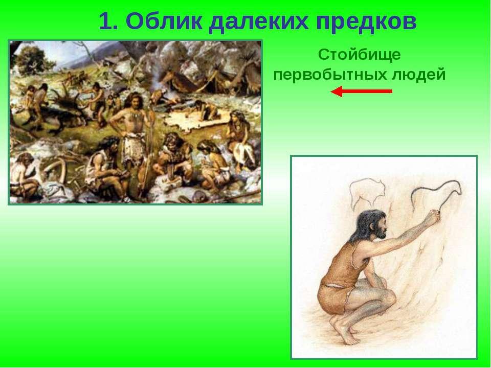 1. Облик далеких предков Стойбище первобытных людей