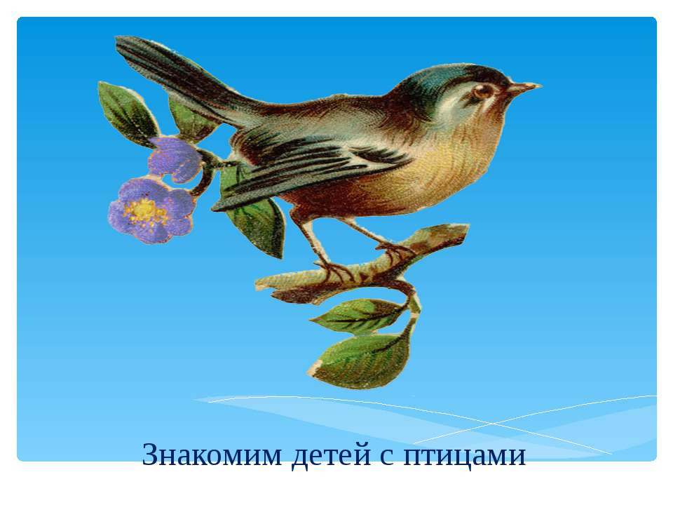 Знакомим детей с птицами