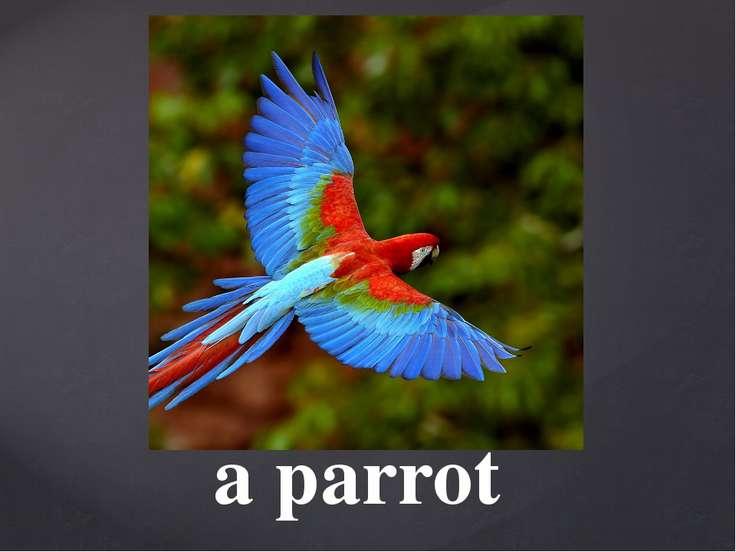 a parrot
