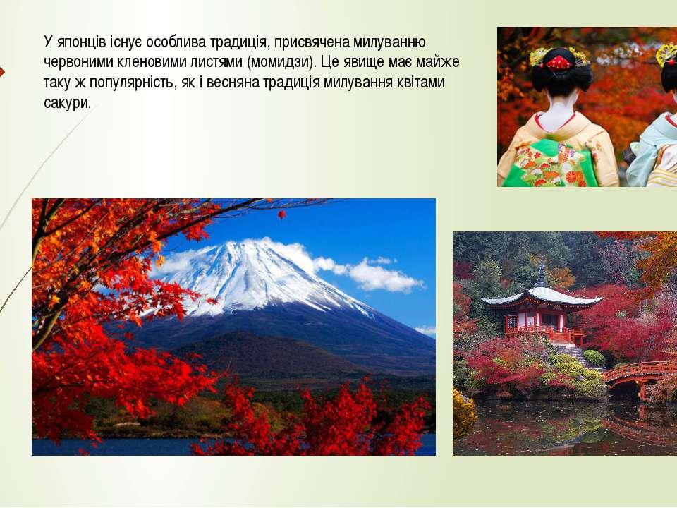 У японців існує особлива традиція, присвячена милуванню червоними кленовими л...
