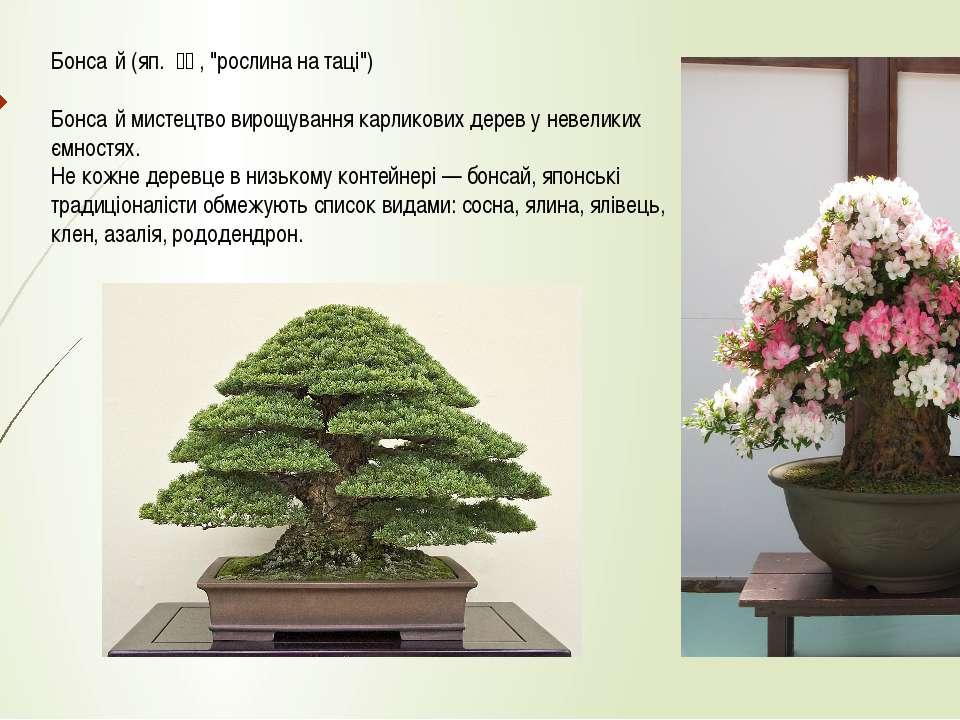 """Бонса й (яп. 盆栽, """"рослина на таці"""") Бонса й мистецтво вирощування карликови..."""