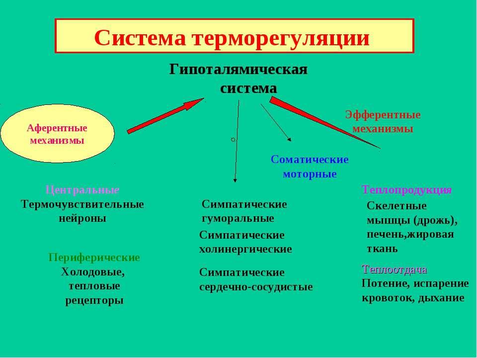 Система терморегуляции Афферентные механизмы Гипоталямическая система Эфферен...