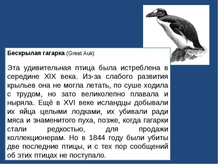 Бескрылая гагарка (Great Auk) Эта удивительная птица была истреблена в середи...