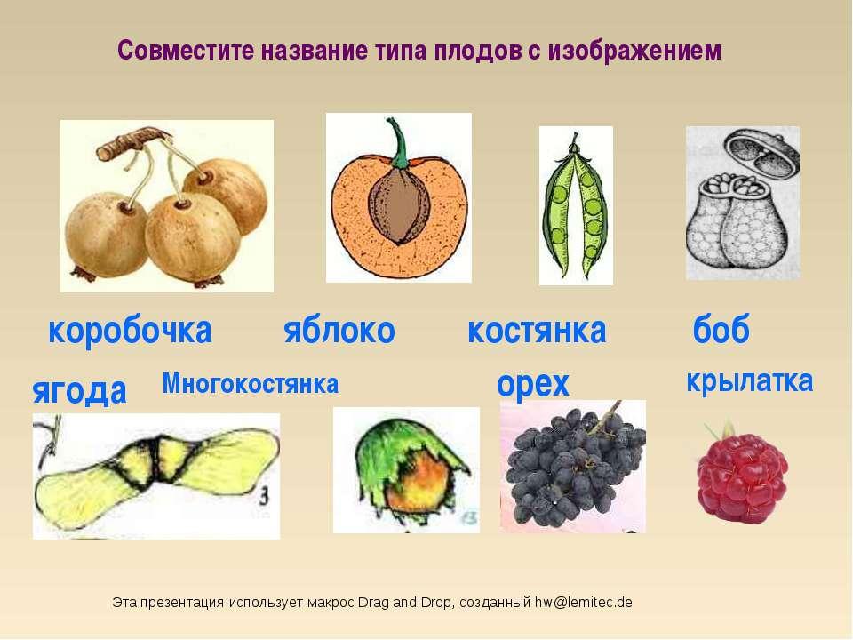 коробочка боб костянка яблоко Совместите название типа плодов с изображением ...