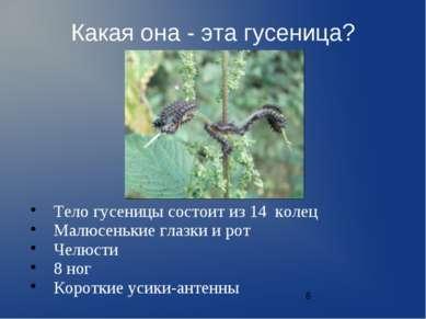 Какая она - эта гусеница? Тело гусеницы состоит из 14 колец Малюсенькие глазк...