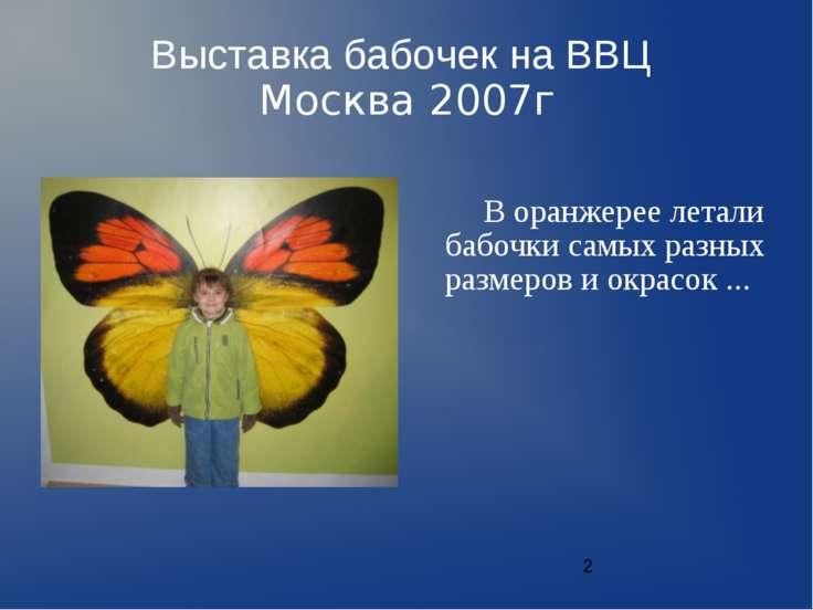 Выставка бабочек на ВВЦ Москва 2007г В оранжерее летали бабочки самых разных ...