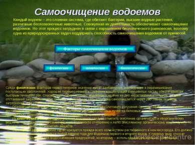 Самоочищение водоемов Каждый водоем – это сложная система, где обитают бактер...