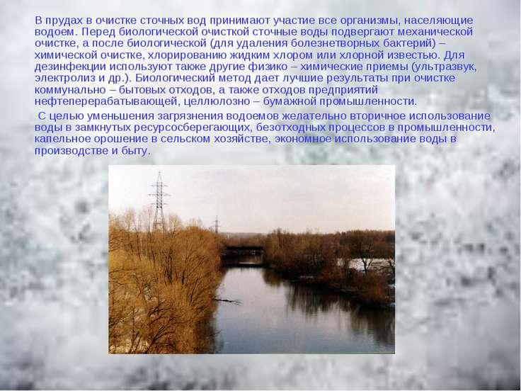 В прудах в очистке сточных вод принимают участие все организмы, населяющие во...