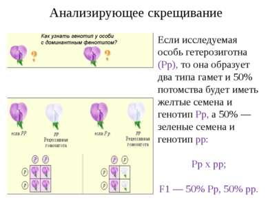 Анализирующее скрещивание Если исследуемая особь гетерозиготна (Рр), то она о...
