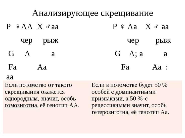 Анализирующее скрещивание Р ♀АА X ♂аa Р ♀ Аа X ♂ аа чер рыж чер рыж G А а G А...