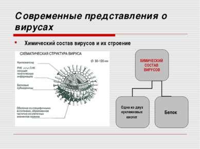 Современные представления о вирусах Химический состав вирусов и их строение