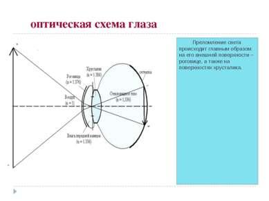 оптическая схема глаза