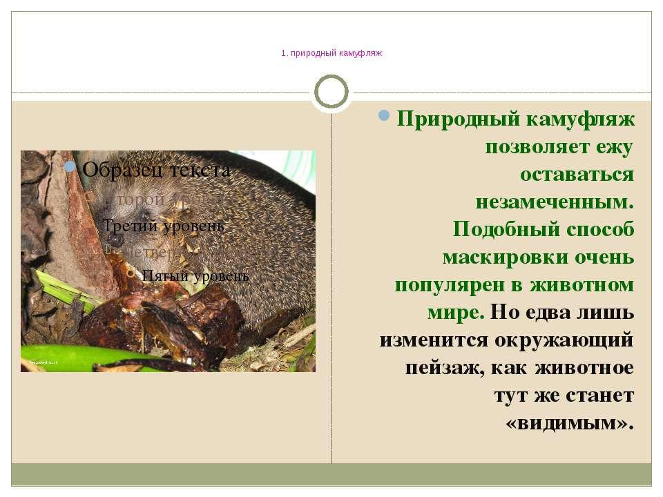 1. природный камуфляж Природный камуфляж позволяет ежу оставаться незамеченны...