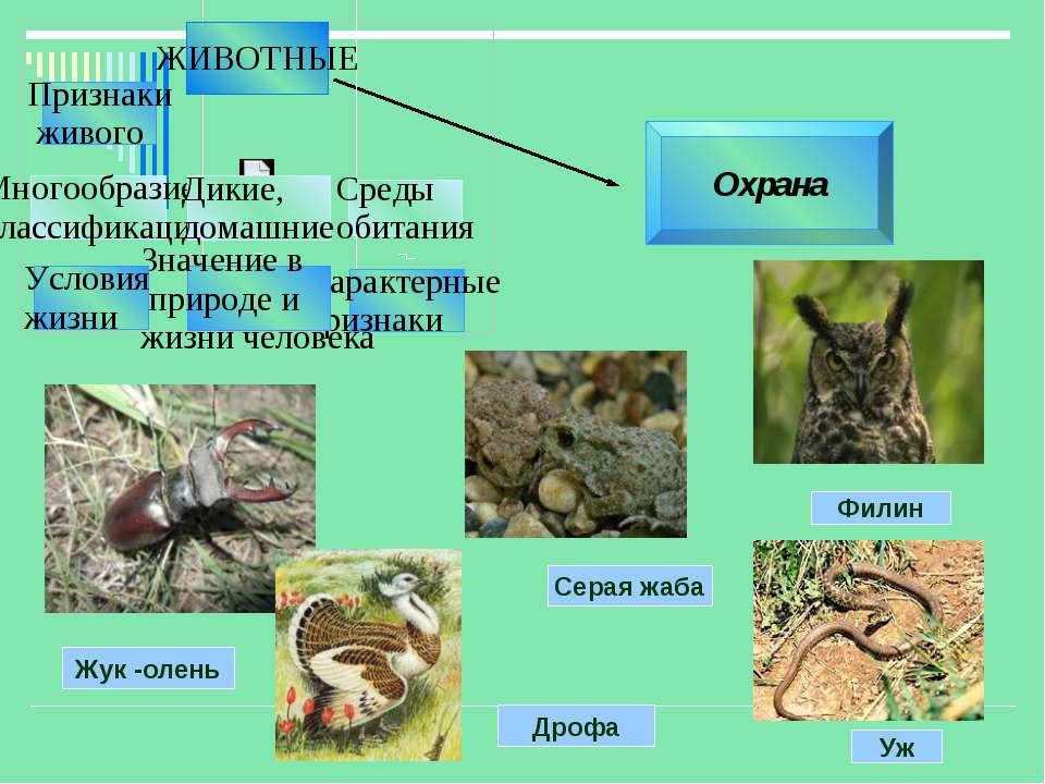 Охрана Жук -олень Дрофа Серая жаба Филин Уж