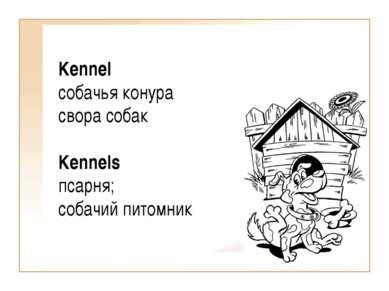 Kennel собачья конура свора собак Kennels псарня; собачий питомник