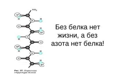 Без белка нет жизни, а без азота нет белка!