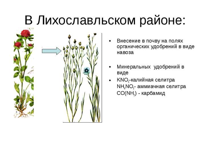 В Лихославльском районе: Внесение в почву на полях органических удобрений в в...