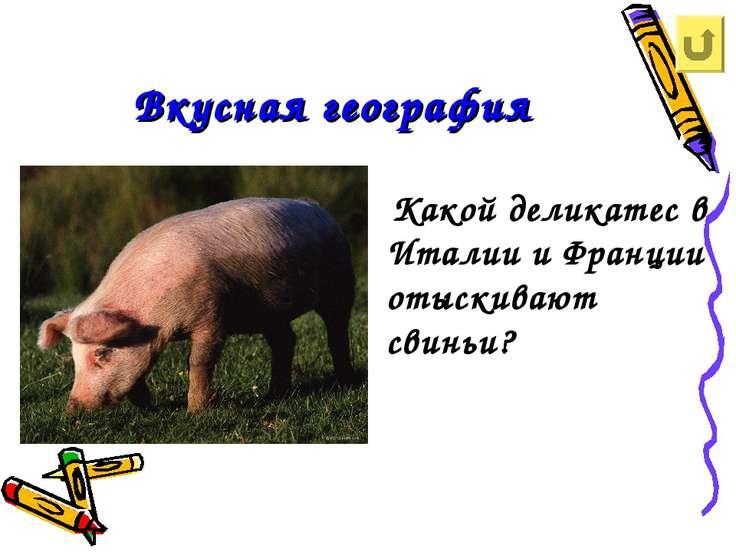 Вкусная география Какой деликатес в Италии и Франции отыскивают свиньи?