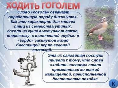 Слово «гоголь» означает определенную породу диких уток. Как это характерно дл...