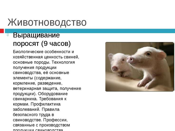 Животноводство Выращивание поросят (9 часов) Биологические особенности и хозя...