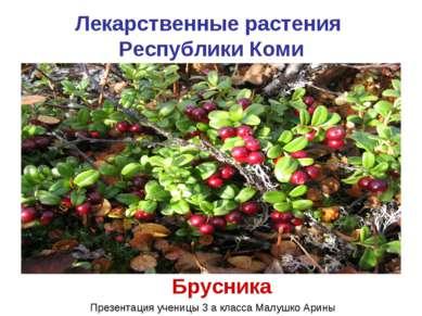 Лекарственные растения Республики Коми Брусника Презентация ученицы 3 а класс...