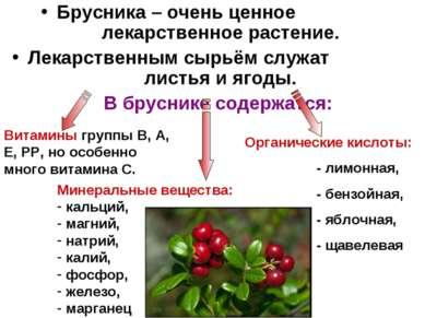 Брусника – очень ценное лекарственное растение. Лекарственным сырьём служат л...