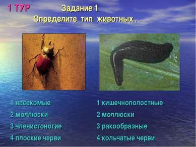 1 ТУР Задание 1 Определите тип животных . 1 насекомые 1 кишечнополостные 2 мо...