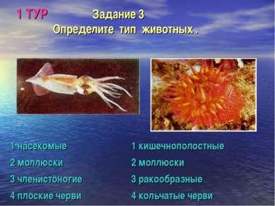 1 ТУР Задание 3 Определите тип животных .