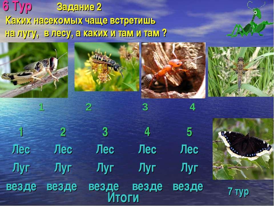 6 Тур Задание 2 Каких насекомых чаще встретишь на лугу, в лесу, а каких и там...