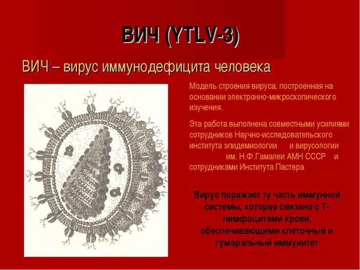 ВИЧ (YTLV-3) ВИЧ – вирус иммунодефицита человека Модель строения вируса, пост...