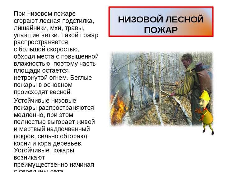 При низовом пожаре сгорают лесная подстилка, лишайники, мхи, травы, упавшие в...