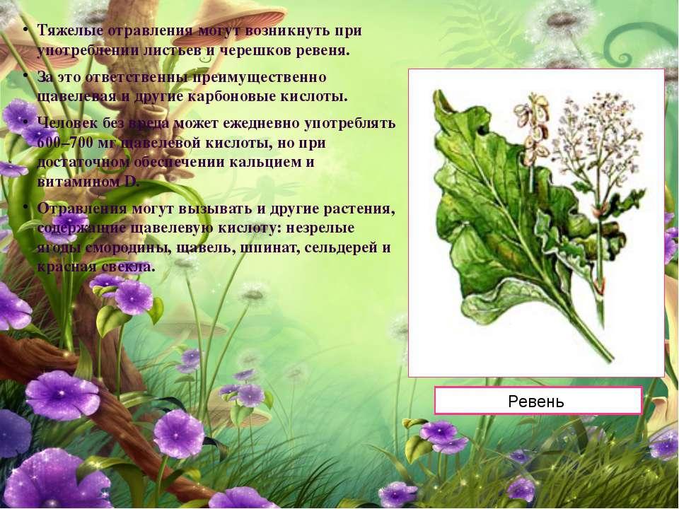 Тяжелые отравления могут возникнуть при употреблении листьев и черешков ревен...