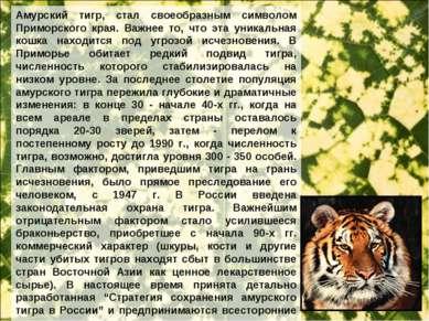 Амурский тигр, стал своеобразным символом Приморского края. Важнее то, что эт...