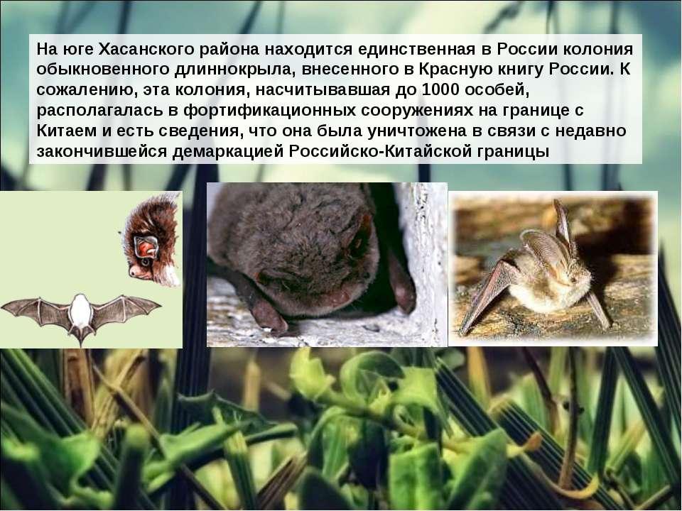 На юге Хасанского района находится единственная в России колония обыкновенног...
