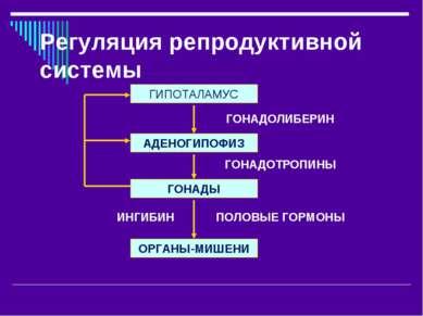 Регуляция репродуктивной системы АДЕНОГИПОФИЗ ГОНАДЫ ОРГАНЫ-МИШЕНИ ГИПОТАЛАМУ...