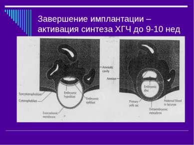 Завершение имплантации –активация синтеза ХГЧ до 9-10 нед