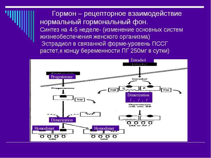 Гормон – рецепторное взаимодействие нормальный гормональный фон. Синтез на 4-...