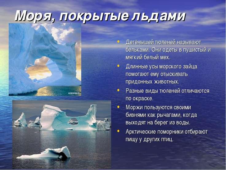Моря, покрытые льдами Детёнышей тюленей называют бельками. Они одеты в пушист...