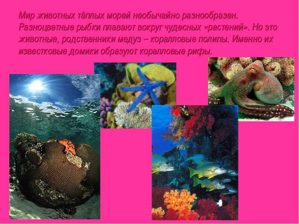 Мир животных тёплых морей необычайно разнообразен. Разноцветные рыбки плавают...